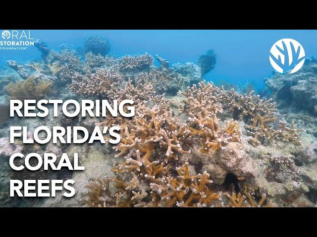 Welcome to the Biggest Coral Reef Restoration Effort on the Planet