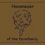 Havaneser Of The Farmfamily L Wurf 9 Wochen Alt Youtube