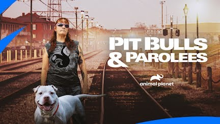 In My 30 Years Of Rescue I Ve Never Seen Anything Like That Pit Bulls Parolees Youtube