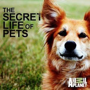 show secret life pets
