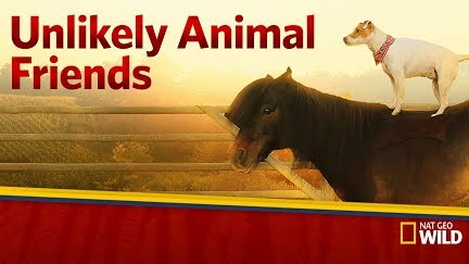 Image of: Gif Unlikely Animal Friends Get Season On Youtube Amazoncom Just Bit Of Donkey Love Unlikely Animal Friends Youtube