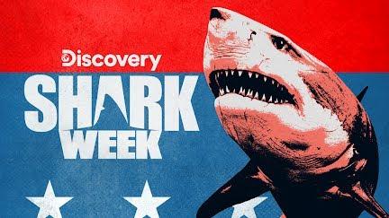Drone Spots Shark Hunting Seal | Shark Week - YouTube