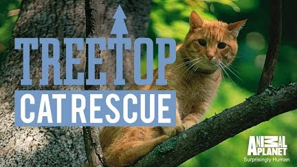 get to know the guys of canopy cat rescue youtube