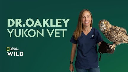 Itching for a Scratch | Dr  Oakley, Yukon Vet - YouTube