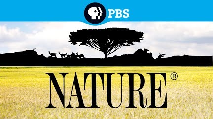 Attenborough And The Sea Dragon Preview Nature Pbs Youtube