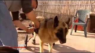 Home Depot Co-workers Help Build Doggie Wheelchair Ramp