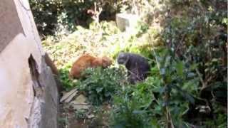外で猫が喧嘩してる! うちの猫は家にいたので誰?と様子見に行ったら近...