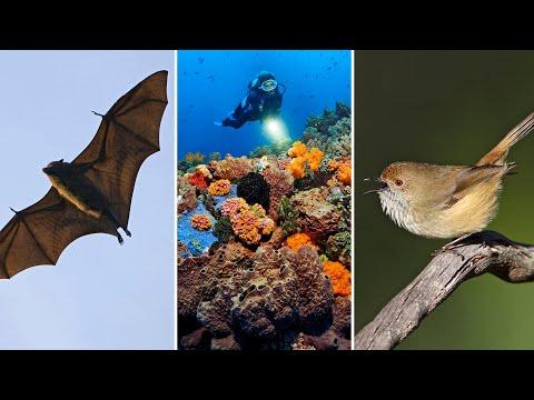 David Attenborough backs 'last chance' push to study Australian biodiversity