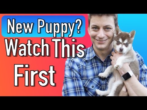everything-you-need-to-be-prepared-for-your-new-puppy!