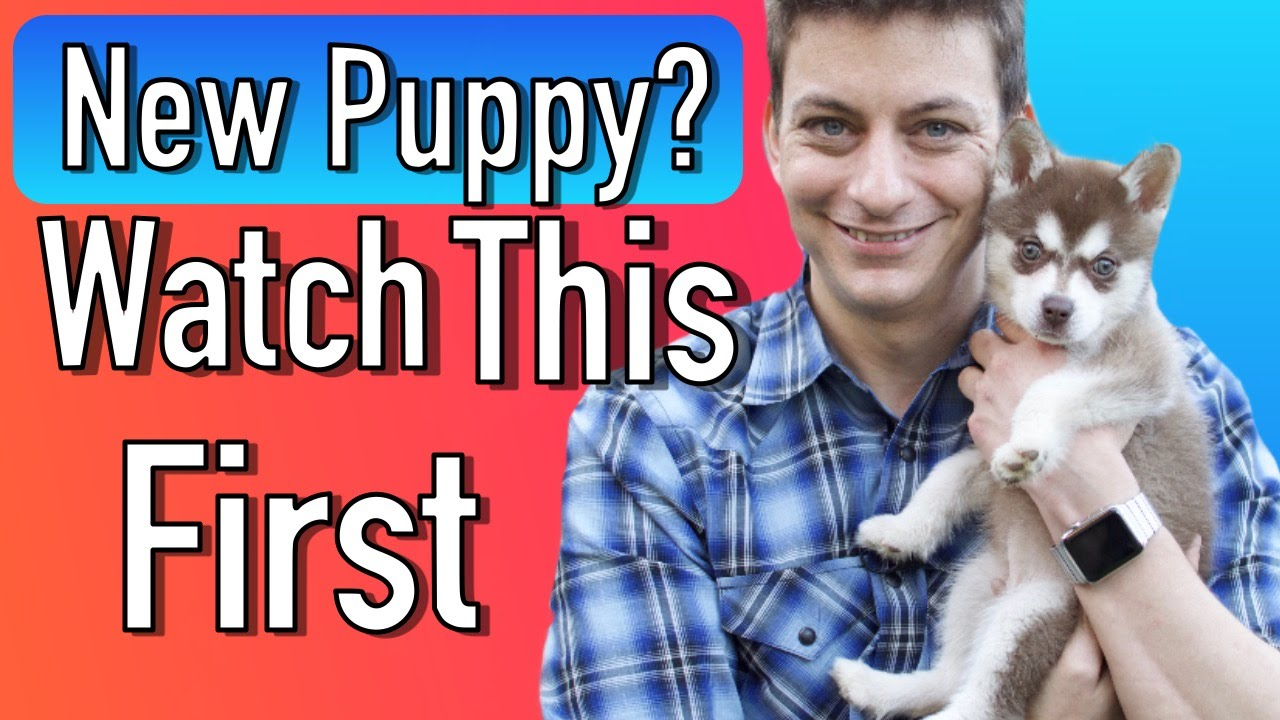 Everything You Need To Be Prepared For Your New Puppy Youtube