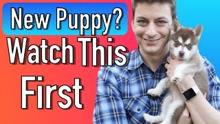 Everything you Need to be Prepared for your New Puppy! thumbnail
