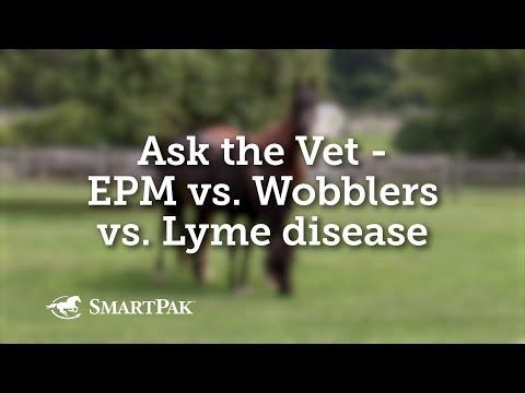 Ask the Vet - EPM vs Wobblers vs Lyme disease