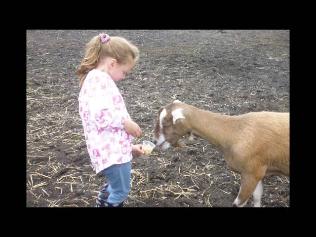 Foundation Farm Trip 2016