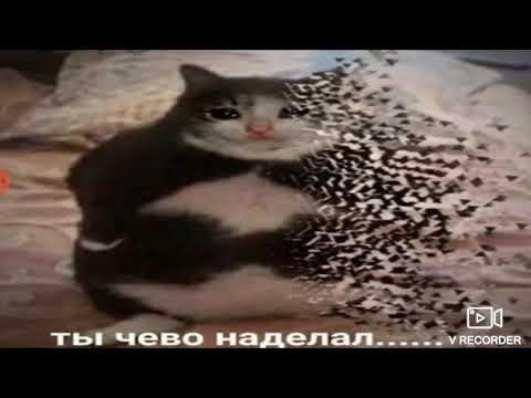 Ты Чево Наделал...... МЕМ Оригинал #Угарные коты# - YouTube