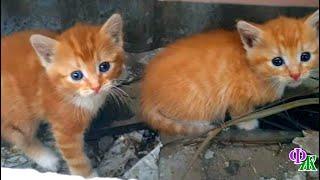 Беспомощные котята бродили по заброшенным тропам, искали еду и ласку