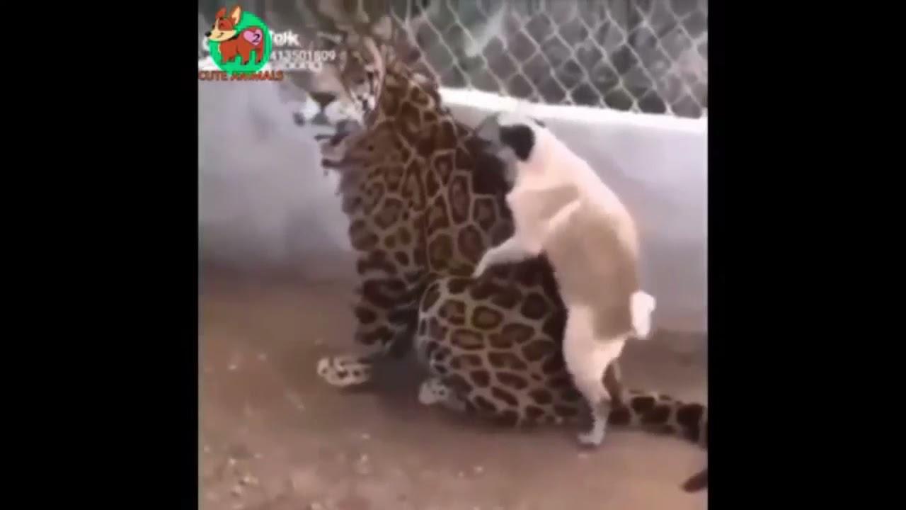Faze comice faze haioase cu animale