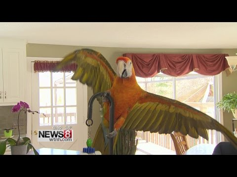 """Cruisin' Connecticut – """"Featherfest"""" with The CT Parrot Society"""