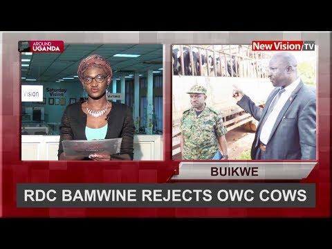 Around Uganda: RDC rejects OWC cows