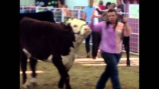 Fairs, Cattle Shows & Concerts 2015! ???