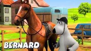 Download Bernard Bear | Horse Race! AND MORE | Cartoons for Children | Full Episodes