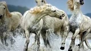 Watch Kenny Rogers She Rides Wild Horses video
