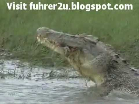 Real Crocodile Attack Victim Killed And Ate By Monster