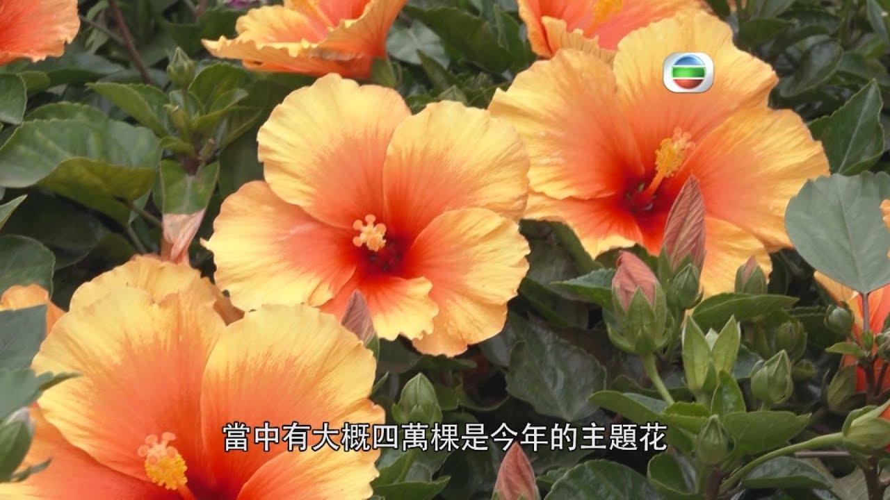 東張西望   直擊2019香港花卉展覽現場 - YouTube