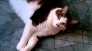 простой кот 2