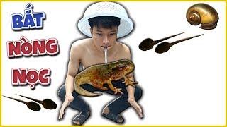 Tony | Lần Đầu Bắt Nòng Nọc Và Ốc Bưu Về Ăn - Catch Snails & Tadpole