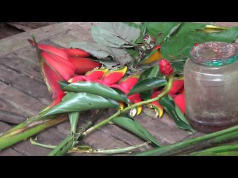 Kumuola Foundation - Sights and Sounds of Hawaii - Living Learning Classroom