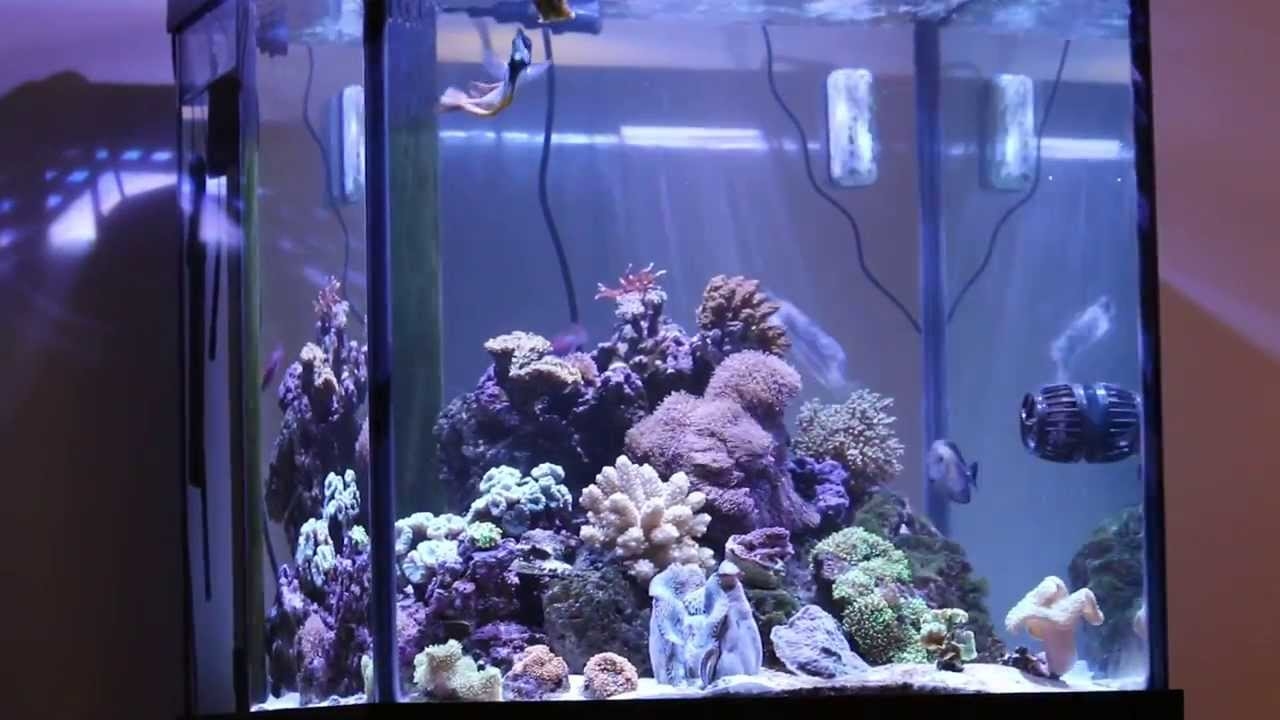 Kessil a360w on 60 deep blue cube saltwater reef aquarium for Cube saltwater fish tank
