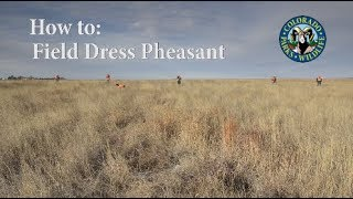 How to Field Dress a Pheasant