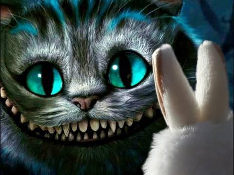 crazy cat картинки