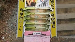 그룹 크로스진(Cross Gene) 세영(Se-Young) 생일축하 쌀드리미화환 - 쌀화환 드리미 Dream…
