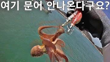 방파제 문어낚시! 액션부터 챔질까지~! Breakwater octopus fishing [괴짜낚시TV]