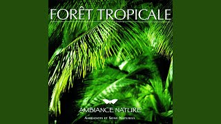 Ambiance Foret tropicale 3