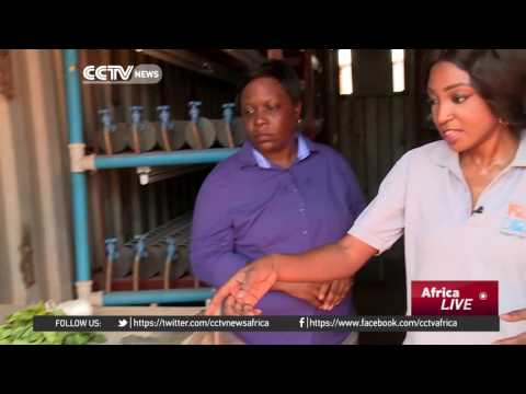 Nigeria entrepreneur converts shipping containers into productive farms