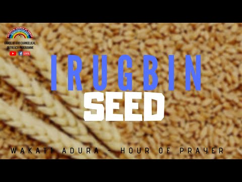 Download SEED - IRUGBIN