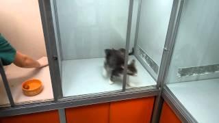 Котята бесплатные в ТЦ Семёновская в Барбосе