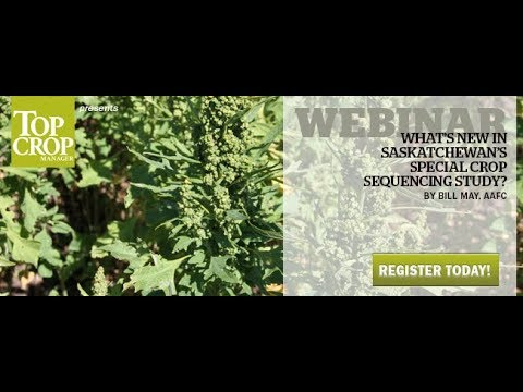 Webinar: Updates to Saskatchewan's special crop sequencing study