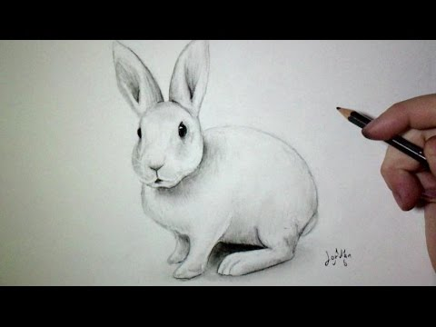 Comment Dessiner Un Lapin Tutoriel Youtube
