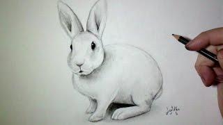 Comment dessiner un lapin [Tutoriel]