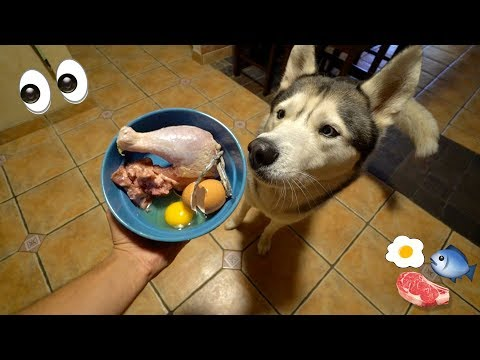 What Feeding Raw To My Husky Looks Like!