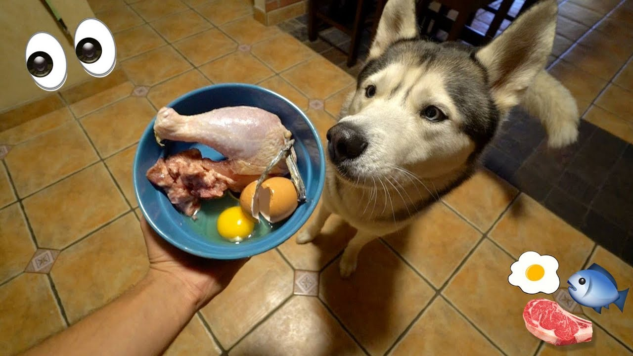 Best Dog Food Puppies Philippines