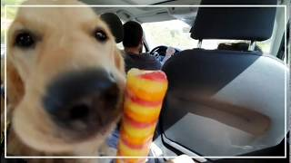 Funny Dogs Life -  Funny Animals' Life - Welcome to the channel of my dogs Dana and Bilma