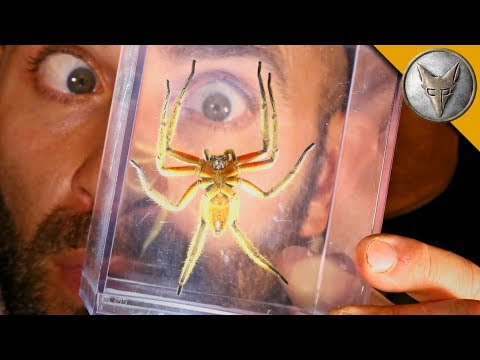 DANGEROUS Jungle Spider!
