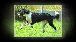 Jacksonville Dogs for Adoption