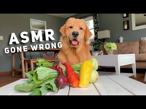 ASMR Taste Test Gone Wrong - Tucker Taste Test 10