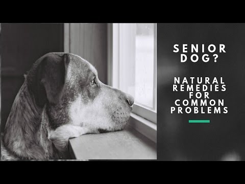 Aging Dog?  Natural Tips To Treat At Home