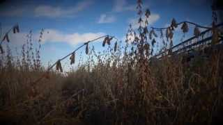 Metheny Farms 2014 - Northeast Arkansas